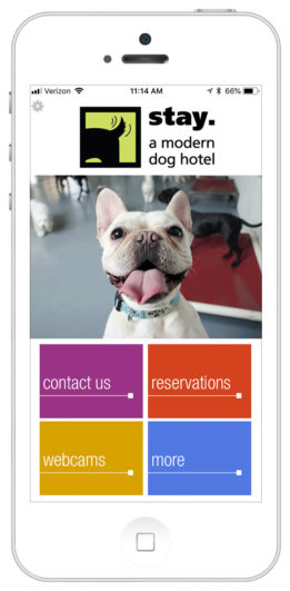 http://stay%20a%20modern%20dog%20hotel